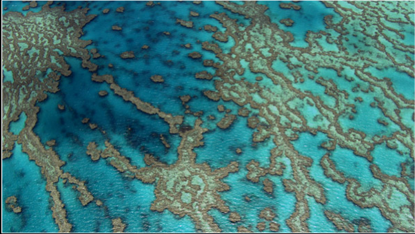 Coralreef_queensland