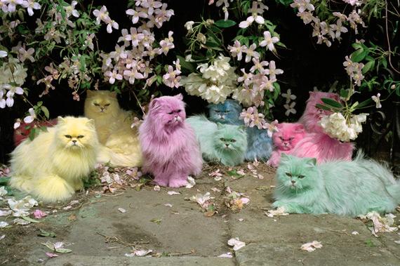 Timwalker_cats